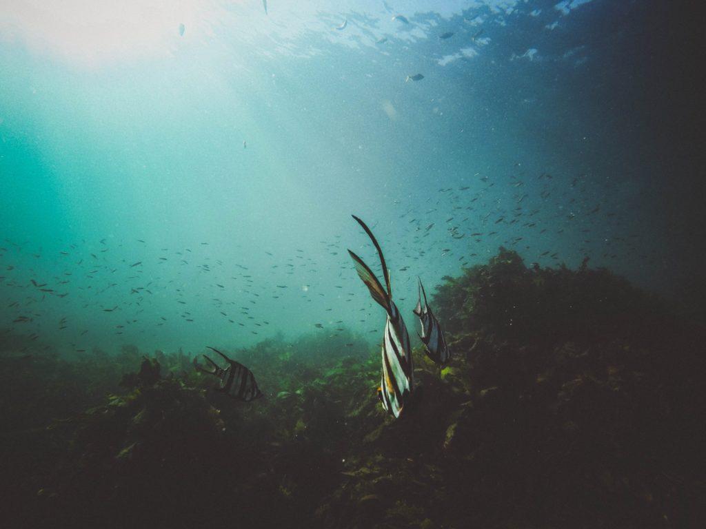 Viele Fische schwimmen schwimmen an einem Riff im Meer