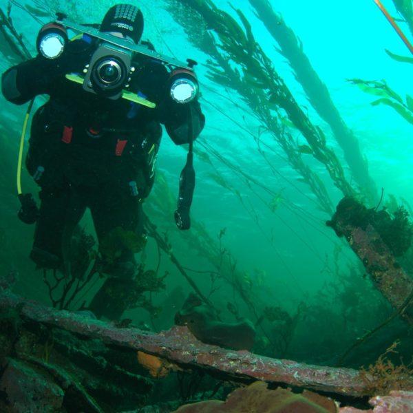 Ein Taucher schwimmt zwischen langen Algen im Meer