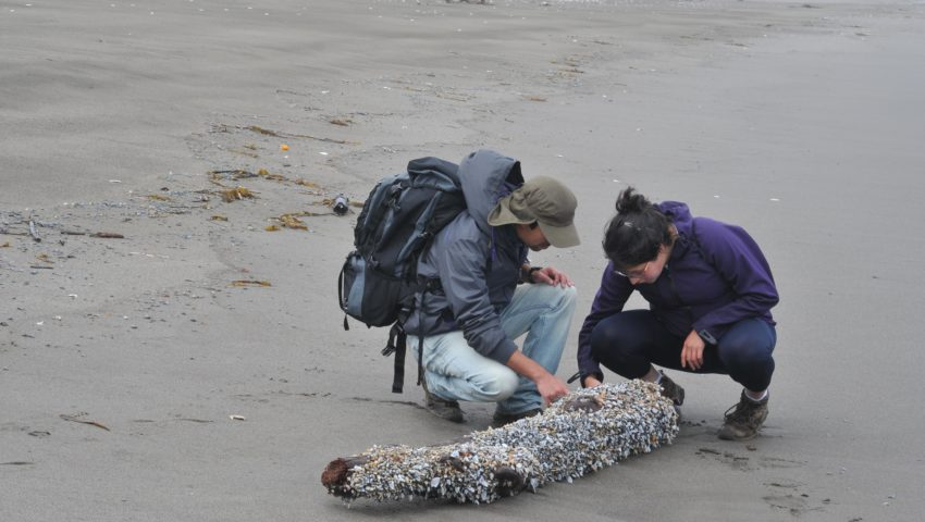 Two people examine a piece of driftwood with shells on a beach by the sea