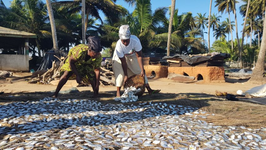 Two women lay out fish to dry on the beach