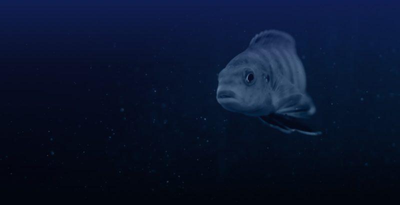 Ein Fisch schwimmt im Meer