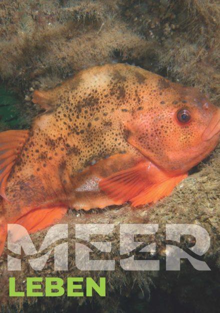 Wunsch-Postkarte der Deutschen Allianz Meeresforschung (DAM): Leben mit dem Meer (Das Motiv steht für Artenvielfalt und Nachhaltigkeit im Umgang mit den Meeren)
