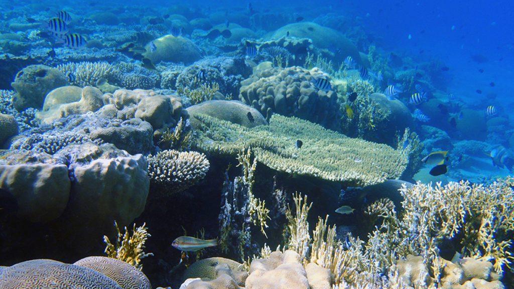 Klimaforschung Tropen Korallenriff Korallenriff im Meer mit hoher Biodiversität in Form von Fischen und Korallen