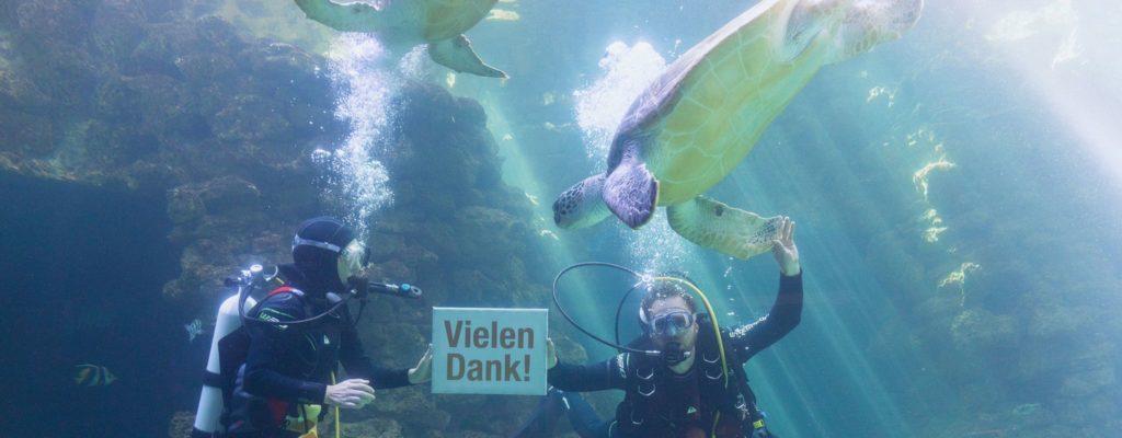Meere Ozeane Zwei Taucher im Aquarium des Deutschen Meeresums mit Schildkröten und Fischen