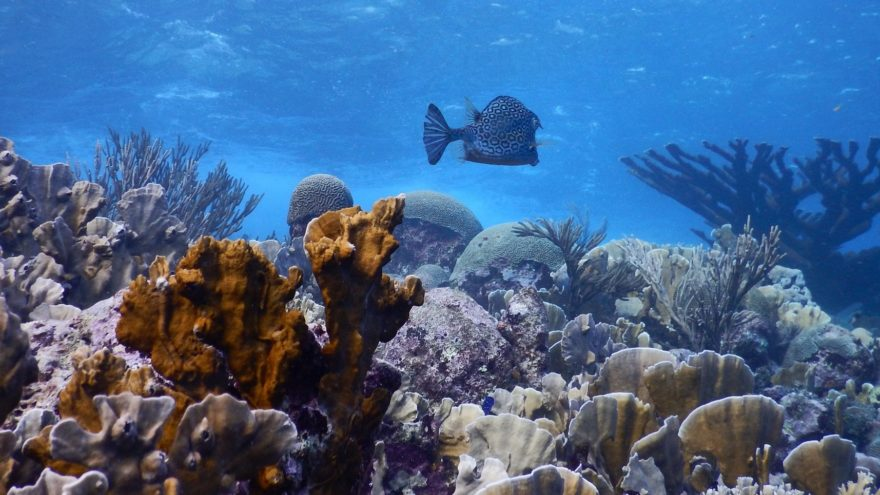 Healthy coral reef in the Caribbean