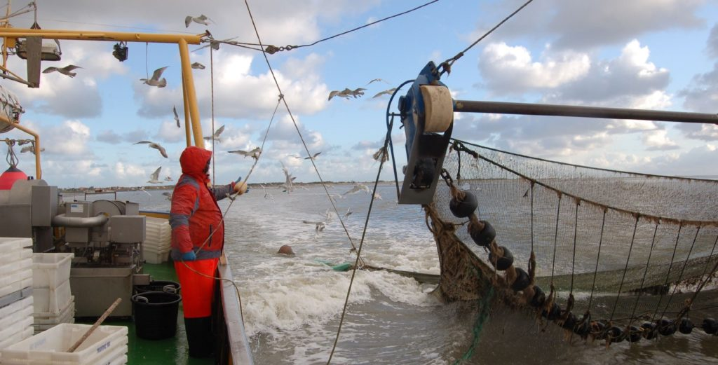 Krabbenfischen für die Forschung