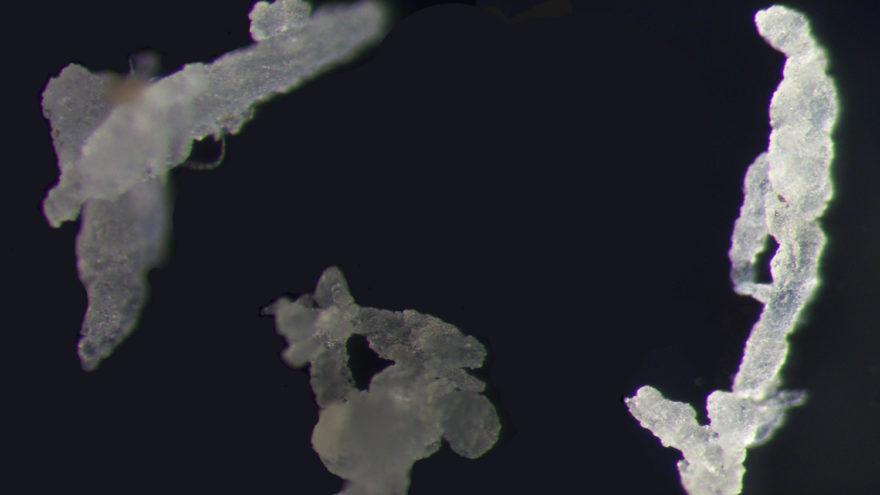 Mikroskopaufnahme von Ethylen-Propylen-Dien-Kautschuk-Partikeln (EPDM). Die drei abgebildeten Partikel gehören zu den größten gefundenen Partikeln und sind etwa 700 bis 1000 Mikrometer lang.