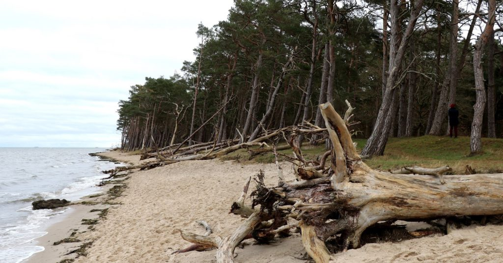 Sturmschäden an den Küsten
