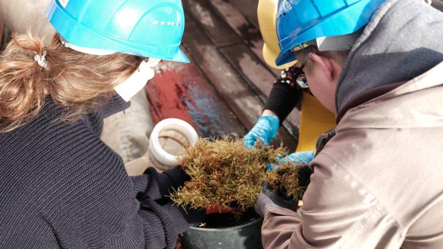 Während einer Expedition nehmen Wissenschaftler*innen im zentralen Nordatlantik Proben von Braunalgen