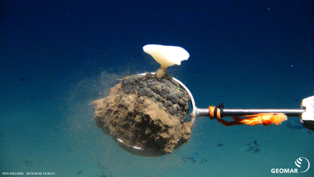 Manganese nodule with a deep-sea sponge. Expedition SO242.