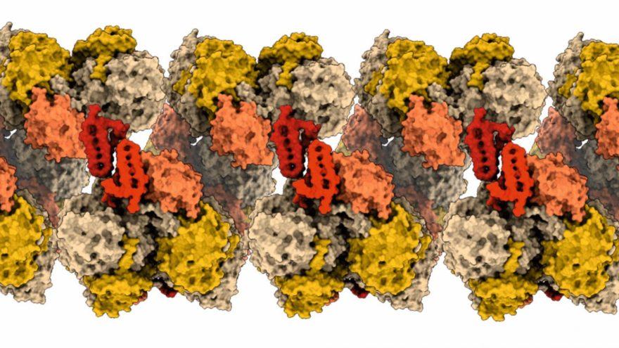 Detaillierte Struktur eines NXR-Stranges
