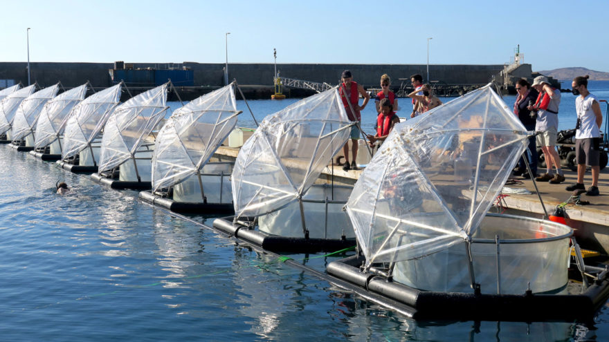 Mesokosmen werden für das Experiment des EU-Projekts Ocean-based Negative Emission Technologies (OceanNETs) auf Gran Canaria vorbereitet