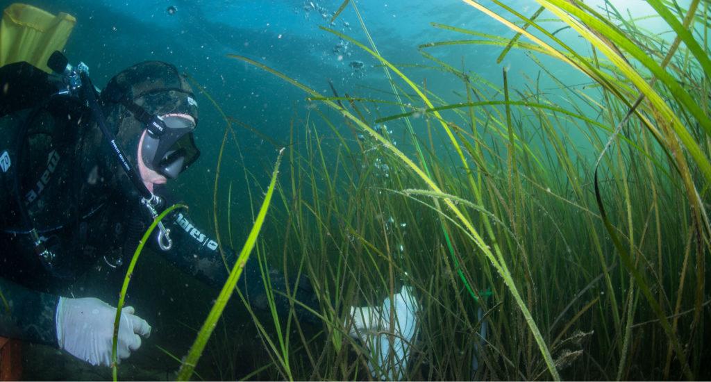 Taucher nehmen Wasserproben in der Seegraswiese